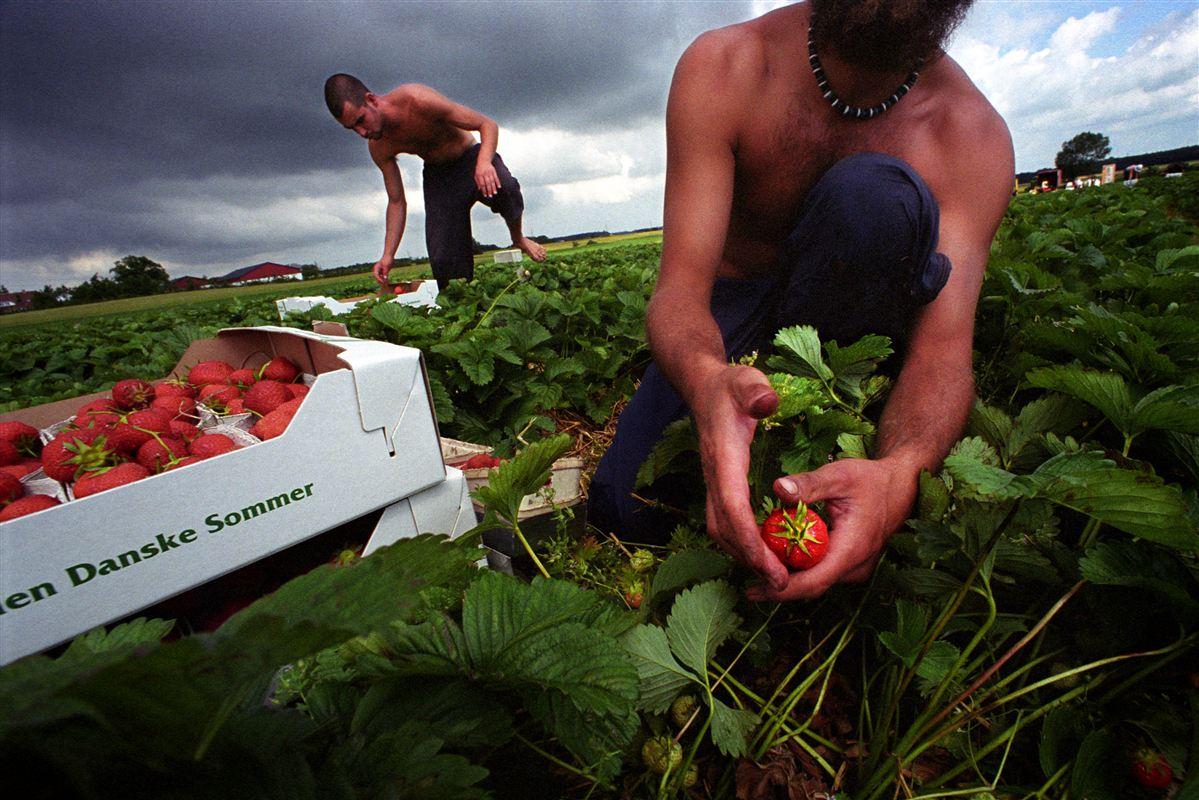 Med vendinger som 'træsko i jordbærmarkerne' og 'græshopper' har de borgerlige partier været med til at blæse den danske velfærdsdebat ud af kurs, mener Morten Helveg Petersen (R).