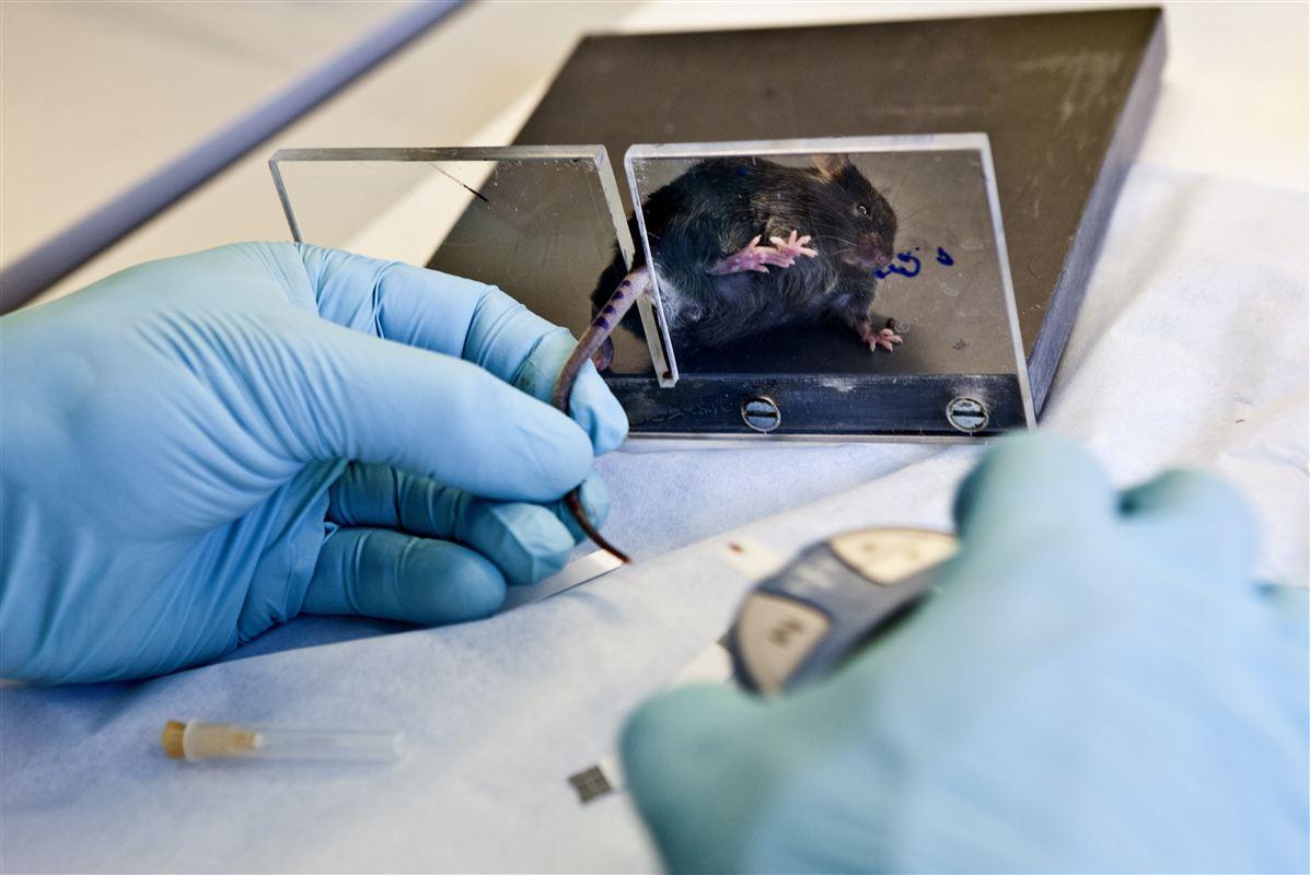 Gravide mus og deres afkom fik dna-skader ved at indånde de nanopartikler, som findes i tryksværte, har forsøg blandt andet vist.