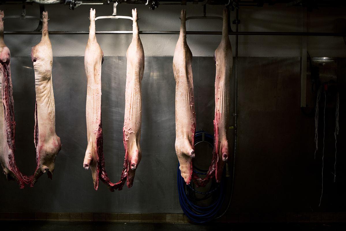 Selv om fremtiden ser dyster ud for slagteriarbejderne på Bornholm, bliver der stadig slagtet svin i Danmark om 20 år, vurderer forsker.
